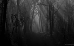 Forests_wallpapers_552